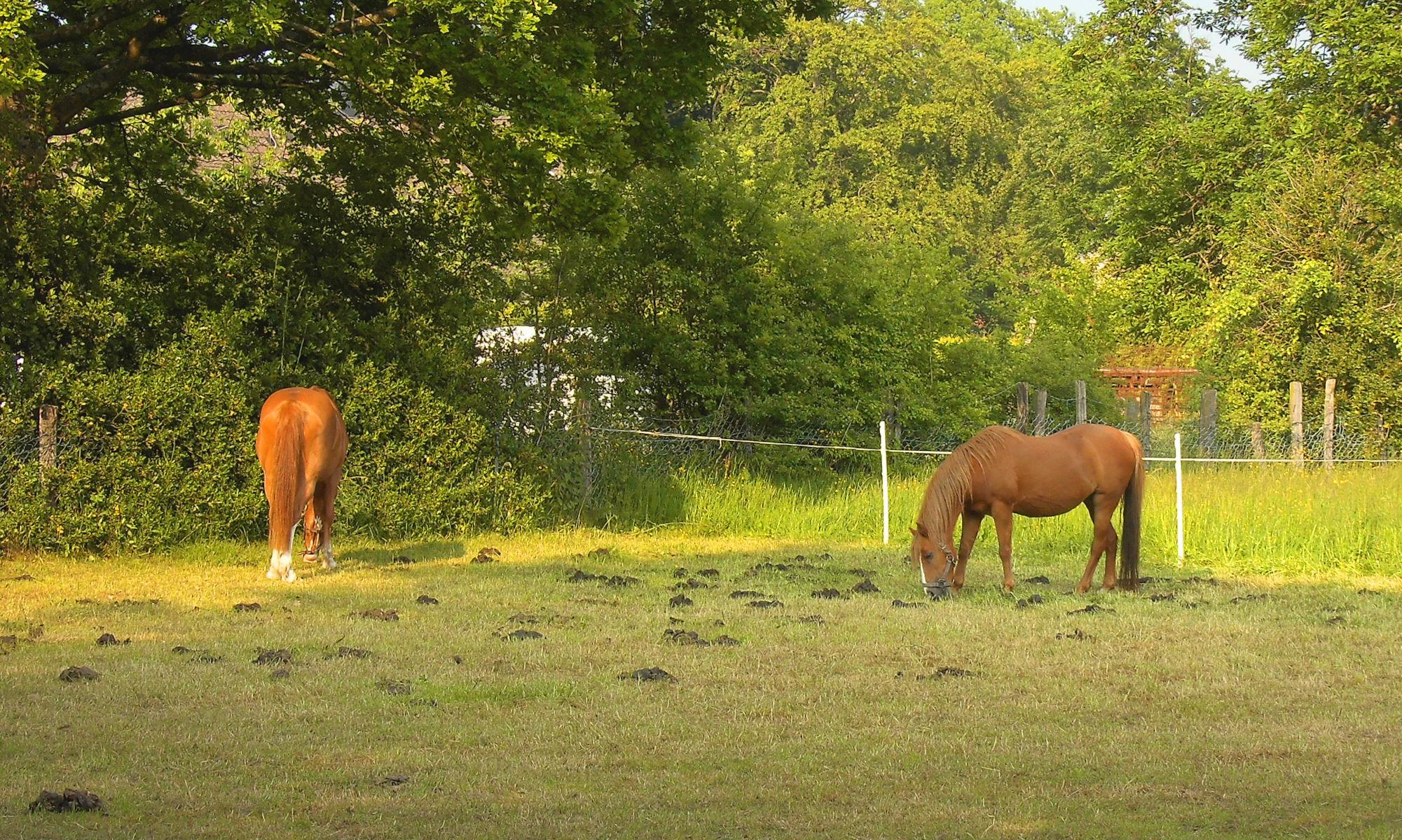 Pferdewiese Nähe Neustraße